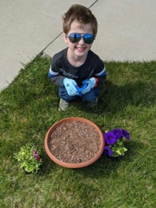 planting a garden with seedlings